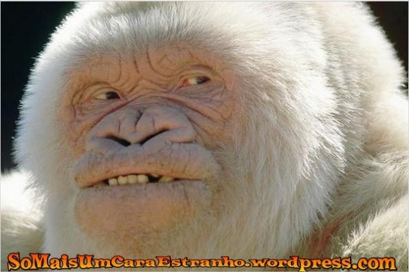 albino-smile-apes-smile-albino_big