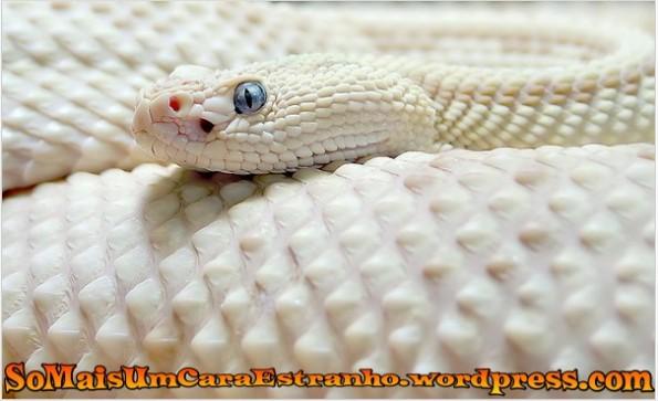 albino-snake-albino-snakes_big
