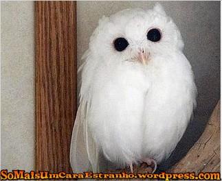 albino_owl_2sfw