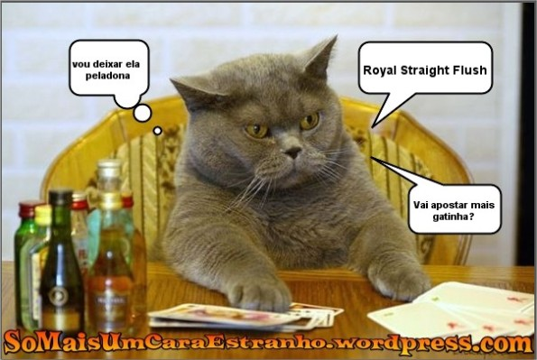 cat-flash-cats-alcohol_big