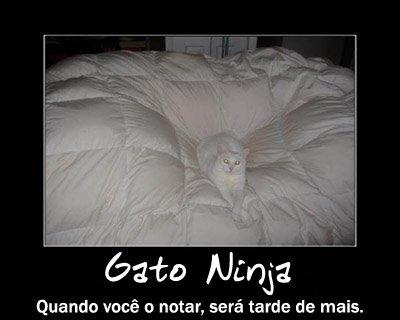 gato_ninja3