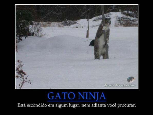 gato_ninja2