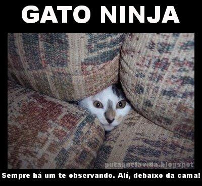 gato_ninja4