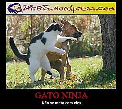 gato_ninja5