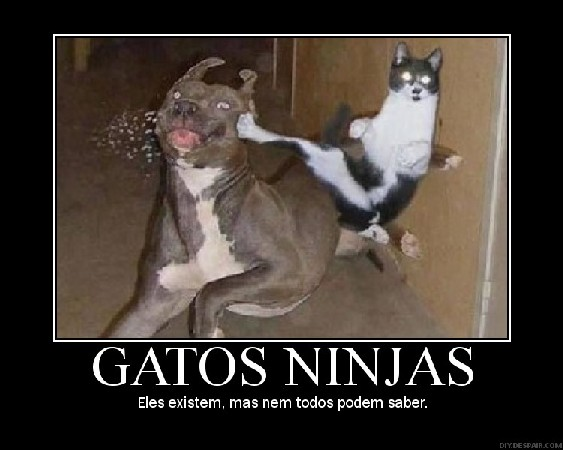 gato_ninja