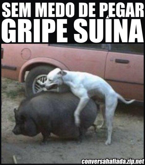 gripe-suina454