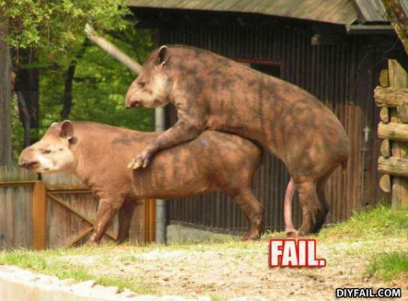 tapirfail